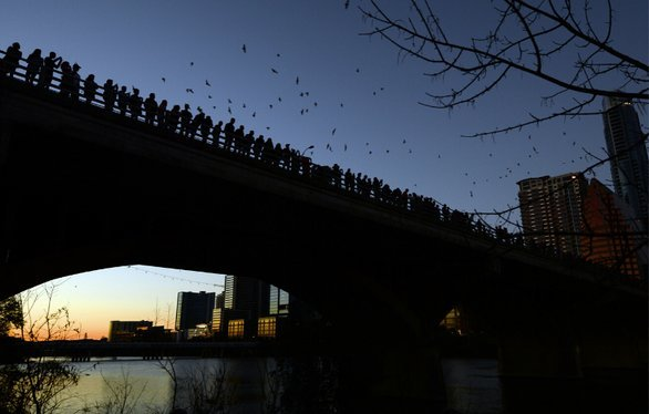 Bats viewing under congress bridge in Austin TX